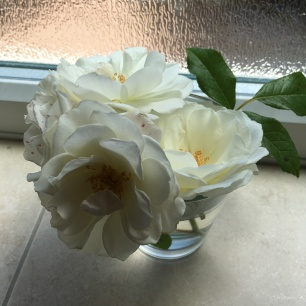 Roses from our back garden