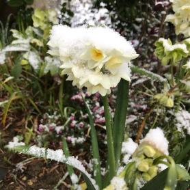 Guernsey snow 2018 - its supposed to be Spring!